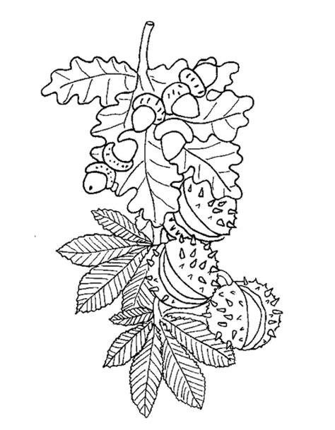 Kleurplaat Beukennootje by Gyermek Kuck 243 Ablakmatric 225 K Sz 237 Nezők ősz