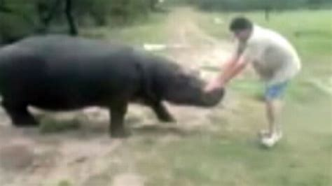 Pet Hippopotamus Kills Farmer Video