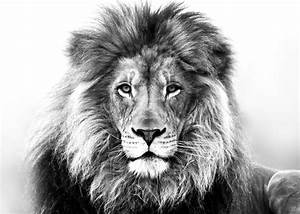 The Lion and The Accuser | Throne Ministries | Tattoo ...