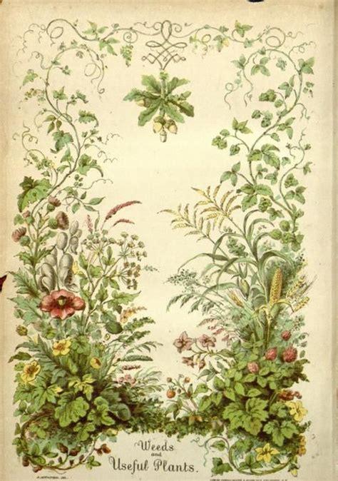 frontispiece  weeds   plants  william