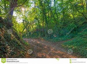 Path, Through, A, Forest, In, Sunlight, In, Autumn, Stock, Photo