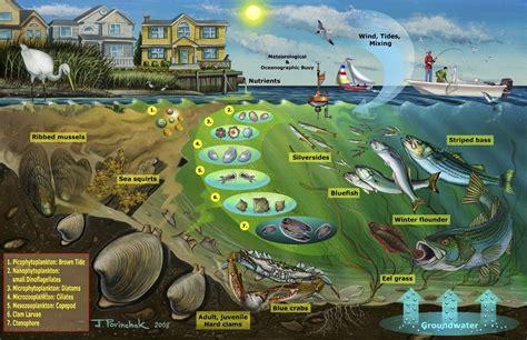 Aquatic Ecosystems Google Search 7th Grade Science