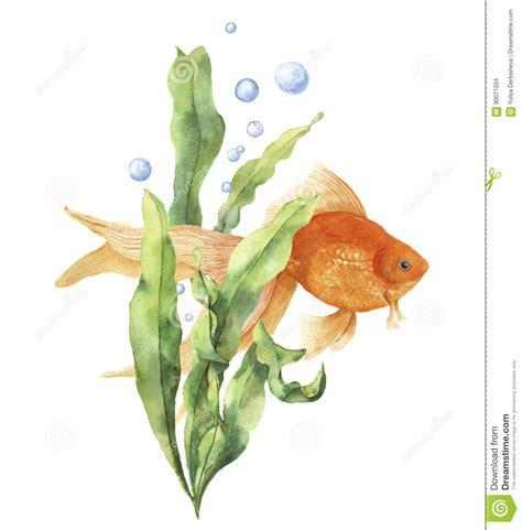 aquarium de carte carte d aquarium d aquarelle copie sous marine peinte 224 la avec le poisson la