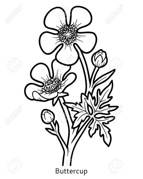 64872246-coloring-book-for-children-flower-buttercup.jpg