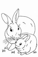 Bunny Coloring Rabbit Pages Bunnies Realistic Rabbits Mother Drawing Printable Easter Velveteen Clip Getdrawings Remarkable Roger Drawings Duggee Hey sketch template