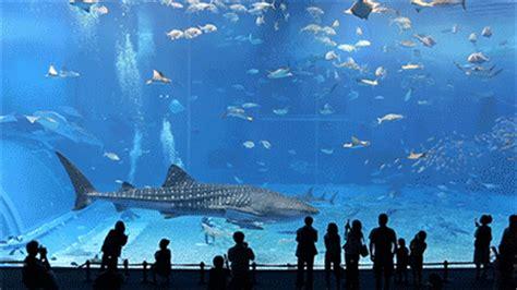 Animated Aquarium Wallpaper Gif - great aquarium fish gif images at best animations