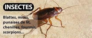 Mites Alimentaires Cycle De Reproduction : d sinsectisation anti blattes cafards punaises de lit ~ Dailycaller-alerts.com Idées de Décoration