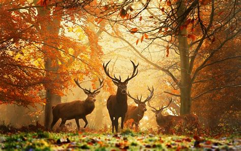 Nature Animals Hd Wallpapers (2014) 3
