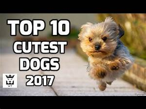 Top 10 Cutest Dogs in the World 2017 - Best Dogs Breeds ...