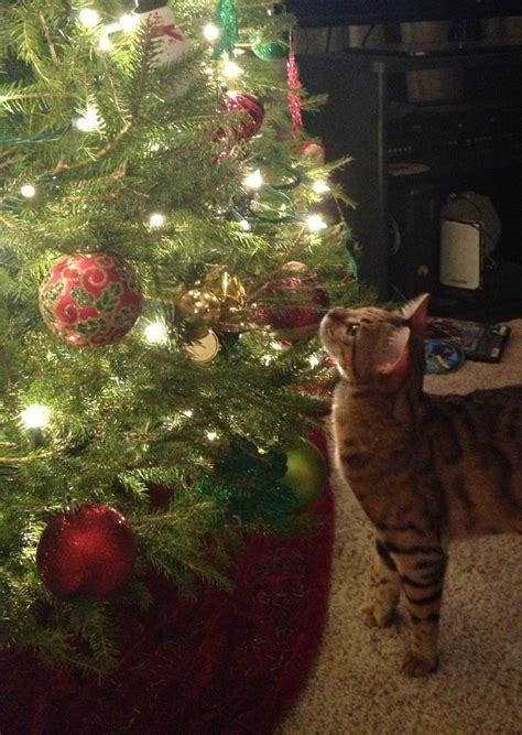 cat first seen christmas tree 25 best ideas about cats on pusheen and cats