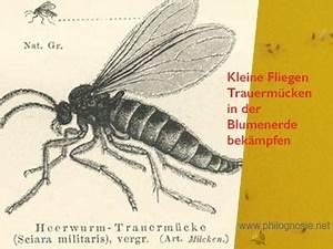 Fliegen In Der Erde : kleine fliegen in der blumenerde bek mpfen trauerm cken ~ Lizthompson.info Haus und Dekorationen