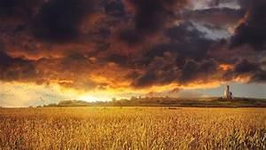 Golden sunset over a field wheat grass clouds sky ...