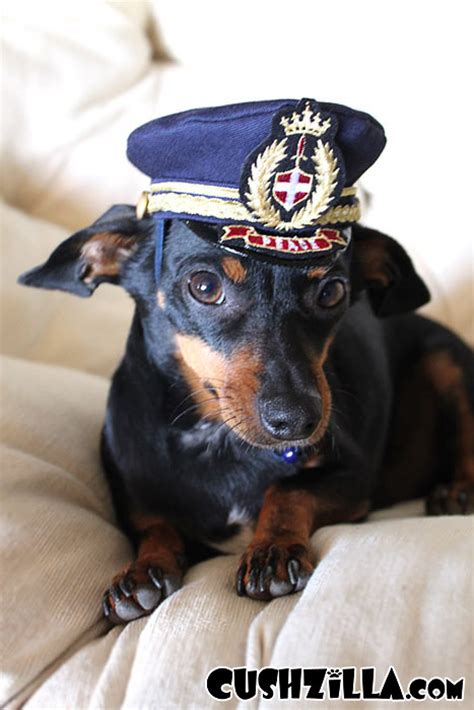 Dog Boat Captain Hat by Captain Kitty Pilot Hat For Cats And Dogs X Small From