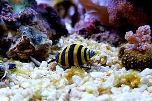 10 Types Of Reef