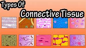 Types Of Connective Tissue