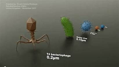 Microorganisms Comparison Comparing Sizes Biology Cell 1mm