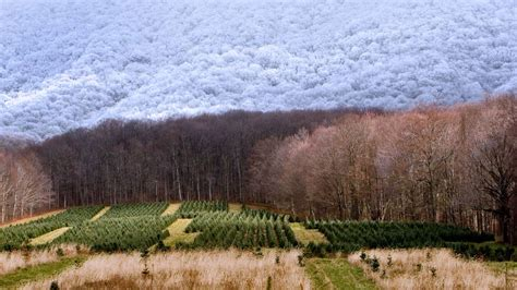 best christmas tree farms in aurora illinois wallpapers page 138 sonu