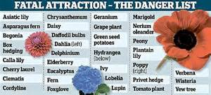 what plants are poisonous to cats imgur post happy flower sniffers sees animals