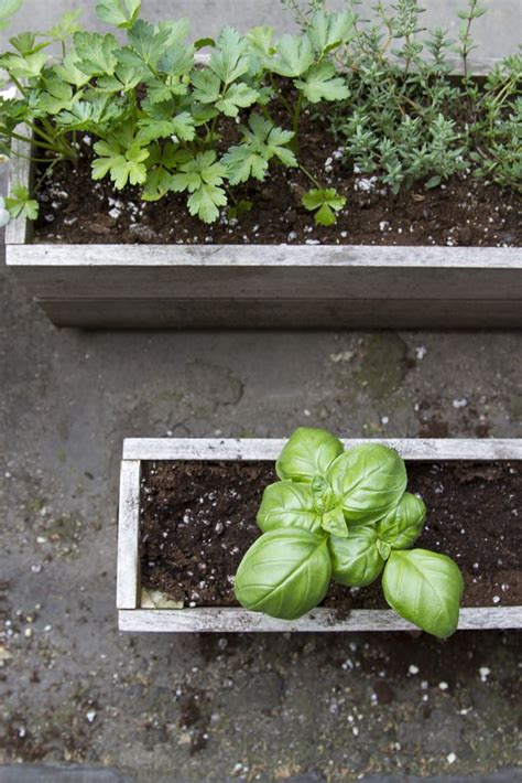 Window Sill Herb Garden Box by 17 Best Images About Window Boxes On Window