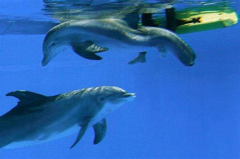 Clearwater Marine Aquarium's oldest dolphin, Panama, is dead