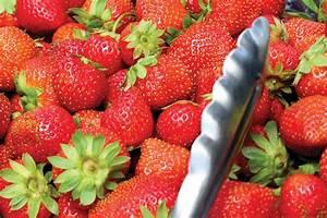 Plant De Fraise : charlotte fraisier plant de fraises ~ Premium-room.com Idées de Décoration