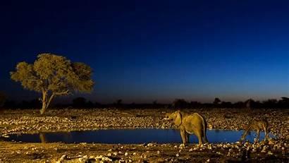 Wildlife Wallpapers Desktop 4k 1080p Stunning Backgrounds