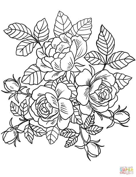 gambar mewarnai bunga harian nusantara