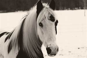 My Corner of the World: Black and White Pony