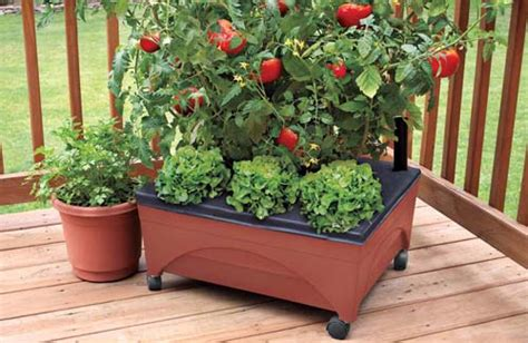10 common mistakes to avoid when growing tomatoes in containers page 2 of 2 home and garden