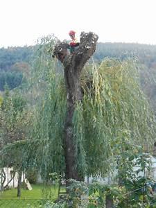 Taille Du Saule Pleureur : taille d un saule pleureur wirth paysage ~ Melissatoandfro.com Idées de Décoration