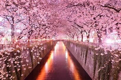Sakura Japanese Japan Background Wallpapers Wallpaperaccess Backgrounds