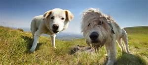 Vermieter Verbietet Hund : einen aufregenden urlaub mit ihrem hund in sterreich ~ Lizthompson.info Haus und Dekorationen
