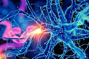 Our Brains May Be Able To Make New Neurons Throughout
