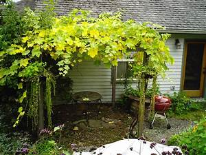 DIY Pergola Designs Grape Vines Wooden PDF modern wood