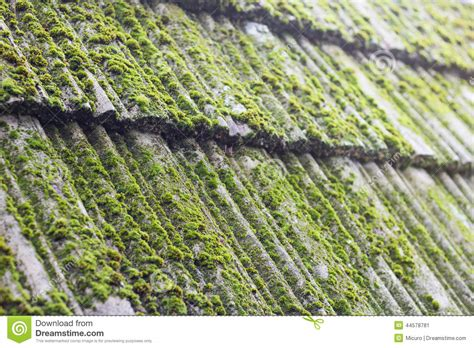 Moss On Old Roof Tiles Stock Image. Image Of Hero, Growth