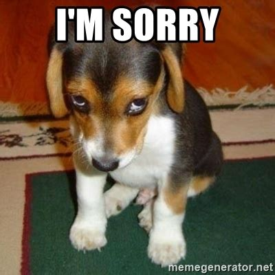 I Am Sorry Meme - i m sorry sorry dog meme generator