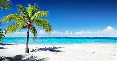 Palme Palm Tree Scenic