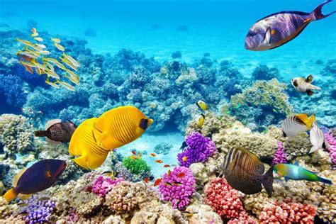 rip great barrier reef