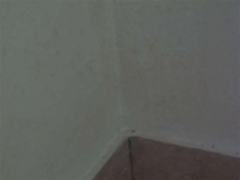 Schimmel Im Treppenhaus by Wasser Schimmel Flecken Im Hausflur Energieforum Auf
