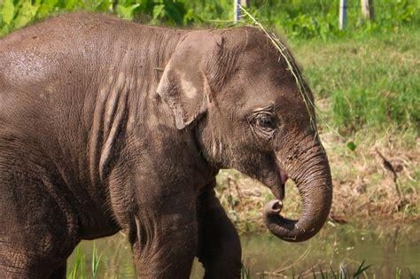 photo essay elephants   elephant nature park