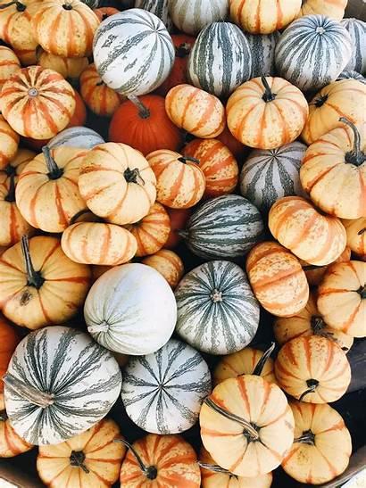 Pumpkin Aesthetic Wallpapers Autumn Fall Iphone Backgrounds