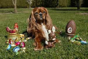 Schneckenkorn Giftig Für Hunde : frage antwort nr 473 ist schokolade f r hunde giftig ~ Lizthompson.info Haus und Dekorationen