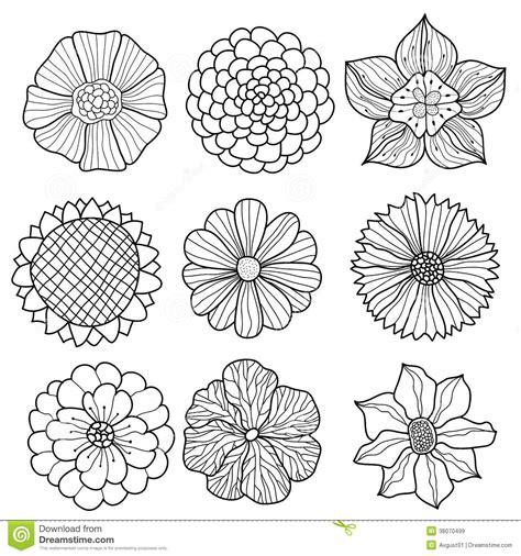 Colección Del Vector De Flores Dibujadas Mano Ilustración