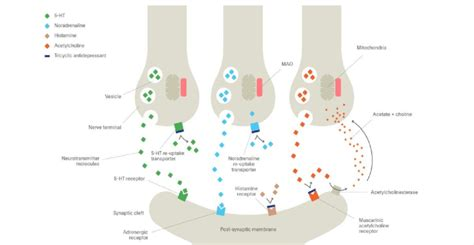mechanism  action  tricyclic antidepressant tcas