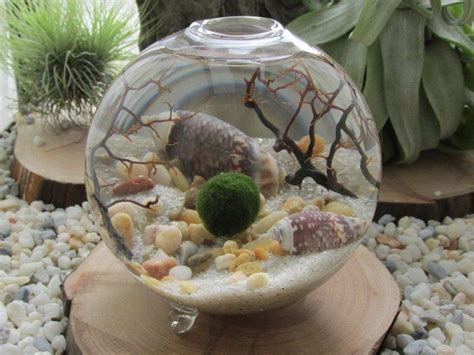 sand selber machen terrarium mit muscheln und sand selber machen dekoideen terrarium marimo moss