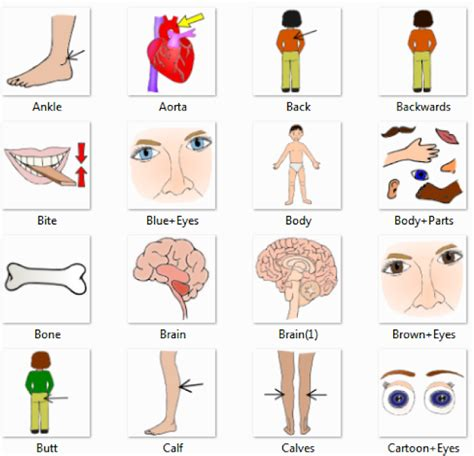 Human Body Parts Pictures With Names  Body Parts Vocabulary Leg, Head, Face