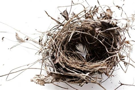 Nest Syndrom by Single Parents And Empty Nest Lovetoknow