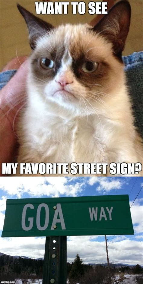 35 Funny Grumpy Cat Memes  Quotes Words Sayings