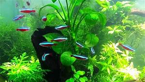 Planted tank Schooling Fish HD video - YouTube