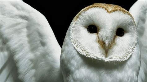 Background Owl Wallpapers by Hd Wallpapers Desktop Owl Hd Dacktop Wallpapers